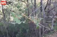 حمله پروانه های برگ خوار به جنگل های ارسباران