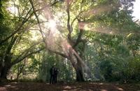 دانلود فصل دوم سریال لوسیفر Lucifer قسمت 6 با زیرنویس فارسی