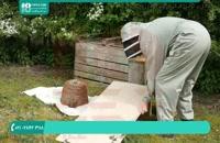 پرورش زنبور عسل | روش جمع آوری دسته های زنبور
