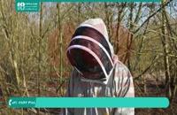 برسی و راه درمان انگل نزوما در زنبور عسل