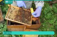 آموزش روش صحیح نگهداری از ملکه زنبور عسل