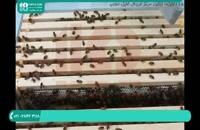 تکانی در زنبورداری نوین چست و چرا آن را انجام می دهیم؟