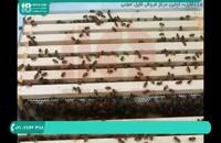 آموزش کامل زنبورداری و پرورش زنبورعسل