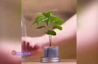 ایدههایی جالب برای نگهداری گل و گیاه در منزل