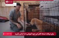 آشنایی با فرق تربیت سگ نگهبان با سگ خانگی