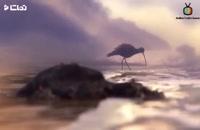 انیمیشن کوتاه و احساسی ماجراجویی پرنده کوچولو