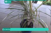 بهترین آموزش پرورش گیاهان آپارتمانی