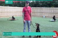 تربیت سگ | جلوگیری از افسار کشیدن در سه گام ساده