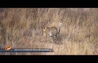 جا های دیدنی حیات وحش تانزانیا
