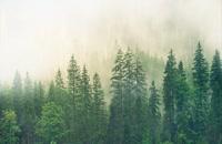 بارش باران و هوای مه آلود در جنگل