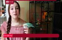 فیلم آموزش تربیت طوطی | اهلی کردن طوطی ( چگونه پرنده را در غیاب خود سرگرم کنیم )