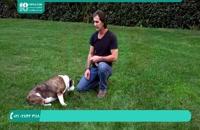 آموزش تربیت سگ | فرمان نشستن | 09130919448