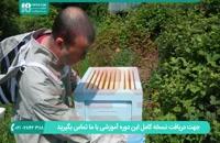 آموزش زنبورداری به شیوه های نوین |09130919448