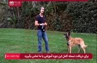 آموزش دستورات پایه ای در طول تربیت سگ