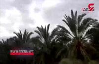 حمله ملخ ها در روستای شندان استان سیستان و بلوچستان