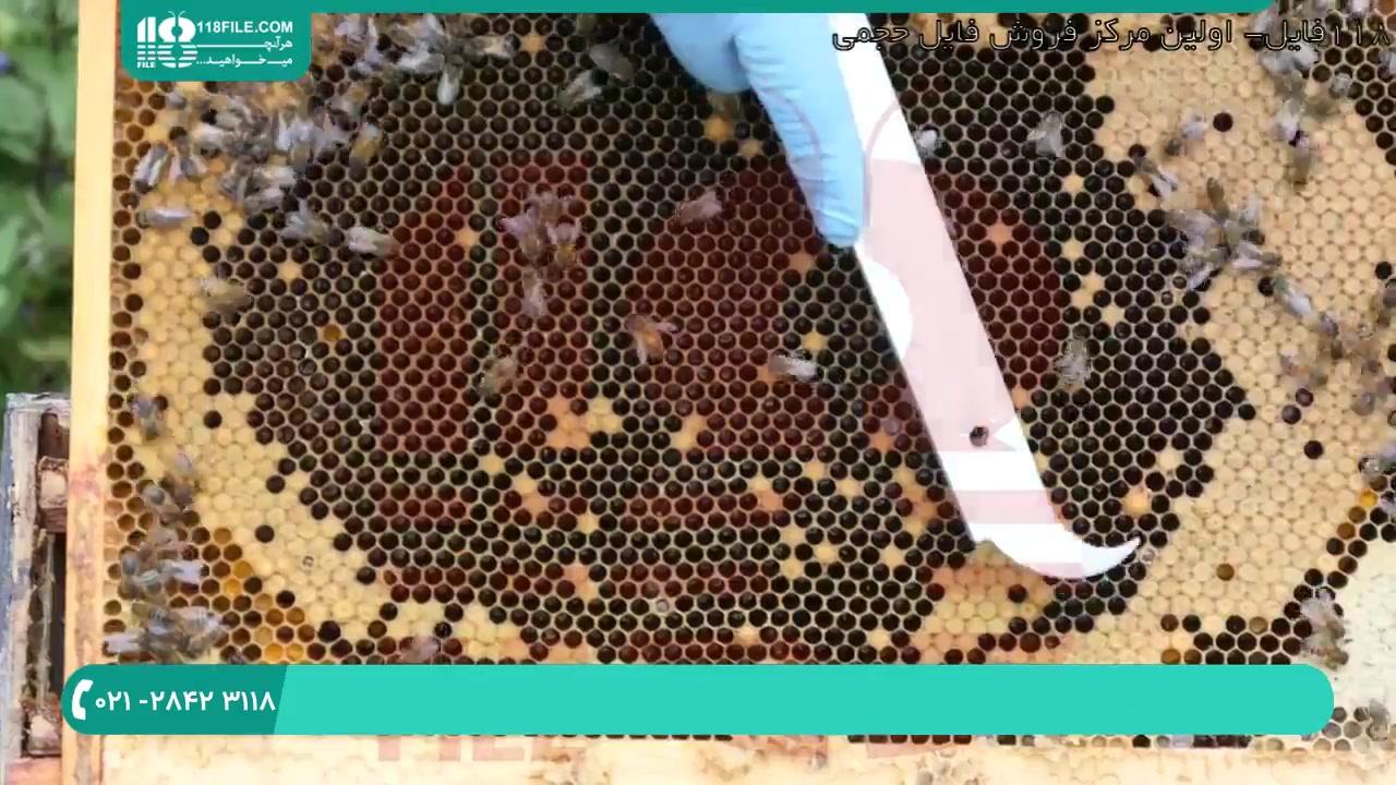 علت مرگ زنبورهای عسل ( علائم بیماری نوزما )