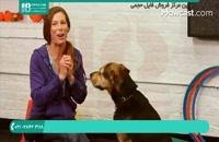 آموزش دست دادن به سگ با ساده ترین روش