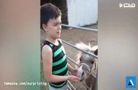 واکنش بامزه کودکان با حیوانات
