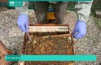 آموزش پرورش و نگهداری زنبورداری