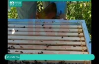 راه های شروع زنبورداری برای مبتدیان