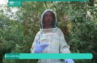 آموزش نحوه افزایش تعداد کندوهای زنبور عسل