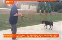 استفاده از خوراکی تشویقی در تربیت سگ