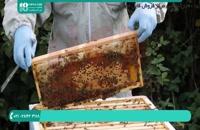 آموزش زنبورداری نوین - پرورش ملکه