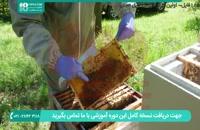 آموزش زنبورداری به سبک ایرانی - پرورش ملکه