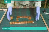 بهترین و نوین ترین روش پرورش ملکه زنبور عسل در ایران
