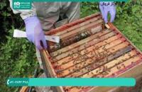 آموزش علمی زنبورداری برای مبتدیان