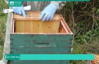 آموزش پرورش زنبور _ 118فایل|09130919448