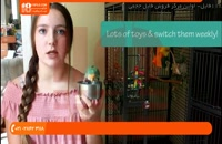 تربیت طوطی - چگونه پرنده را در غیاب خود سرگرم کنیم پارت 2