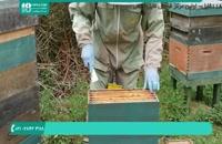 فیلم زنبورداری نوین قسمت 4