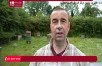 آموزش  حرفه ای زنبورداری - انتقال کندوچه نیاز به غذا دارد
