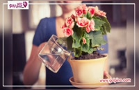 گل های مقاوم برای کسانی که وقت ندارند!