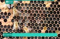 فیلم زنبورداری نوین قسمت 5