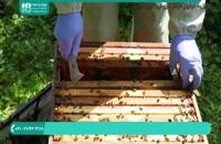 از بین بردن شته واروآ در زنبورداری مدرن