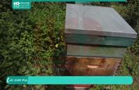 آموزش زنبورداری آموزش تقسیم کندو