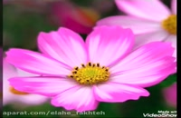 دکلمه زیبای قدرت محبت و مهربانی به یکدیگر