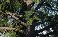 دانلود پلاگین Real Trees v1.1 برای بلندر