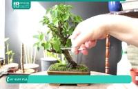 نحوه ی پرورش گیاهان آپارتمانی