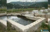 ضدعفونی حوضچه پرورش ماهی