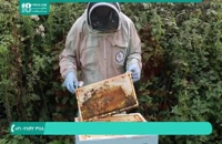 آموزش زنبورداری برای افراد مبتدی