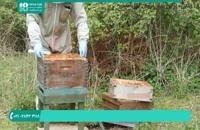 کندو زنبور عسل برای پرورش ملکه