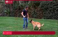 نکات طلایی در مورد استفاده از توپ برای تربیت سگ