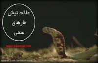 خطرناک ترین مارهای ایران | سم قوی برای در امان ماندن از نیش مار سمی