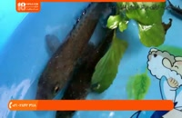 آموزش پرورش ماهی زینتی | ماهی زینتی ( درمان کردن بیماری لکه سفید )
