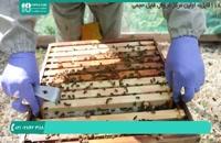 فیلم آموزشی استخراج عسل