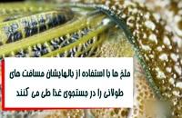 چشم های مرکب ملخ