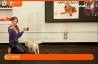 آموزش تربیت سگ یک ساله و بالغ